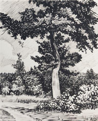 Oak. Sveshnikov A. V.