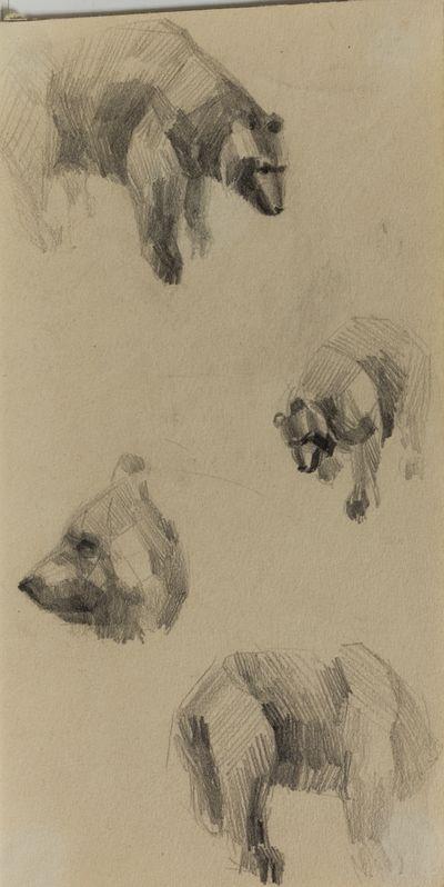 Медведь. Наброски. Вадим Соколов